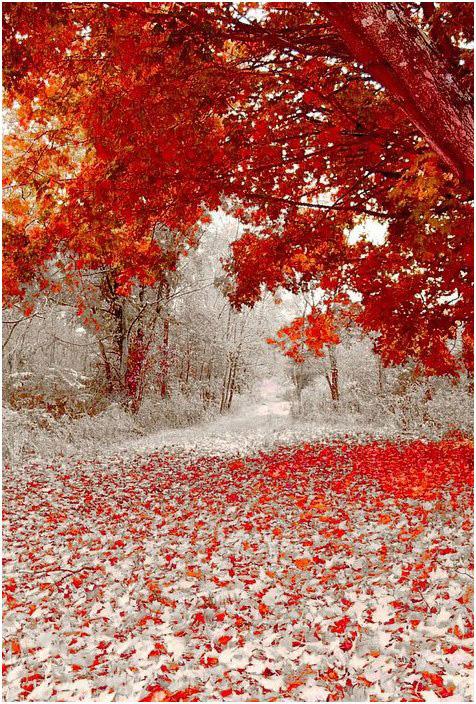 Winter_colors