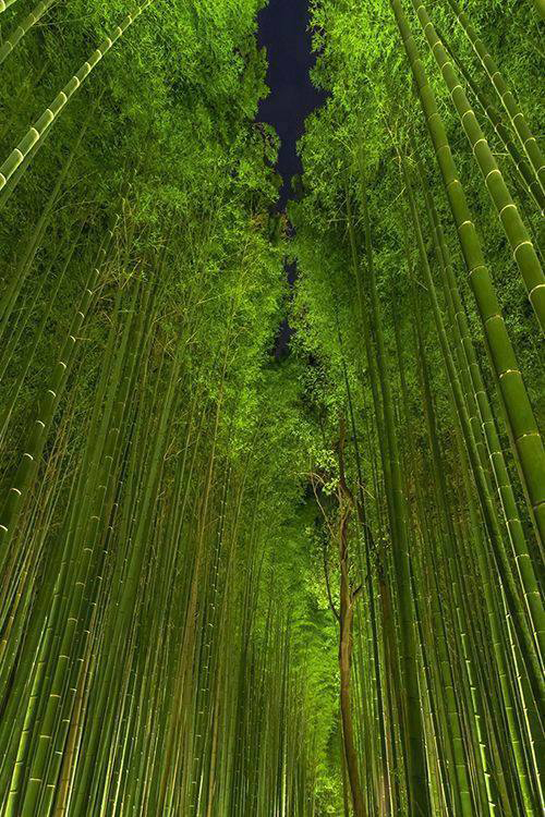 bamboo_forest_japan_w
